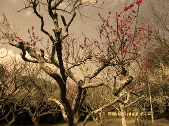 -0229_5835印旛沼公園.jpg