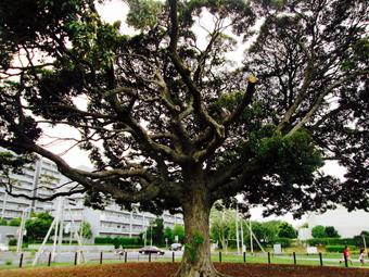 -0604_公園の木.jpg